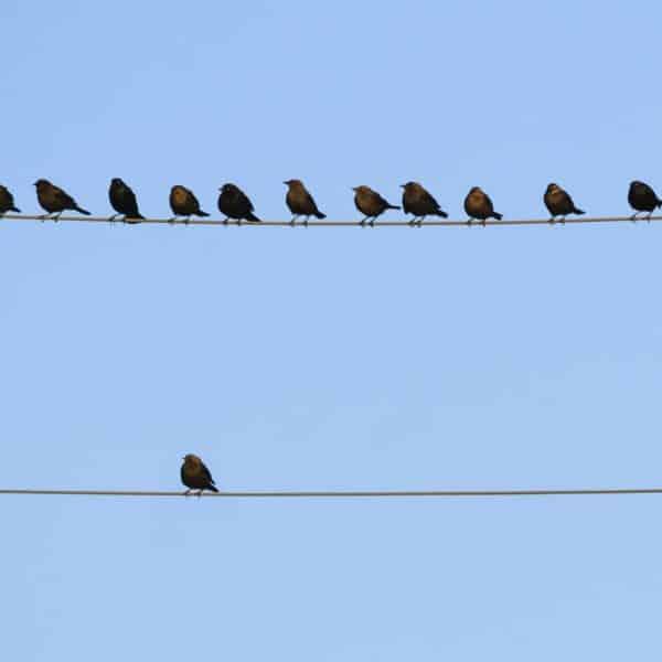birds-on-wire-DustyPixel-